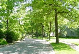 Chesterfield Resident Street Tree Program